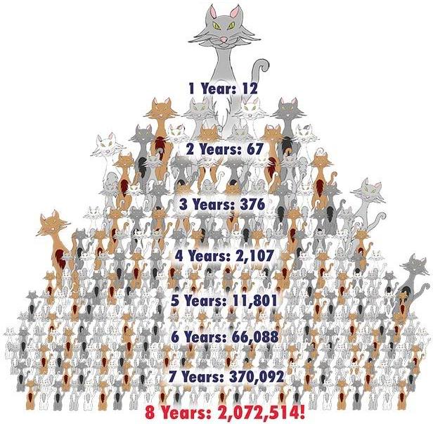 CatPyramid1
